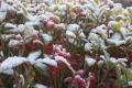 Wintertijd Jacobushoeve 2017
